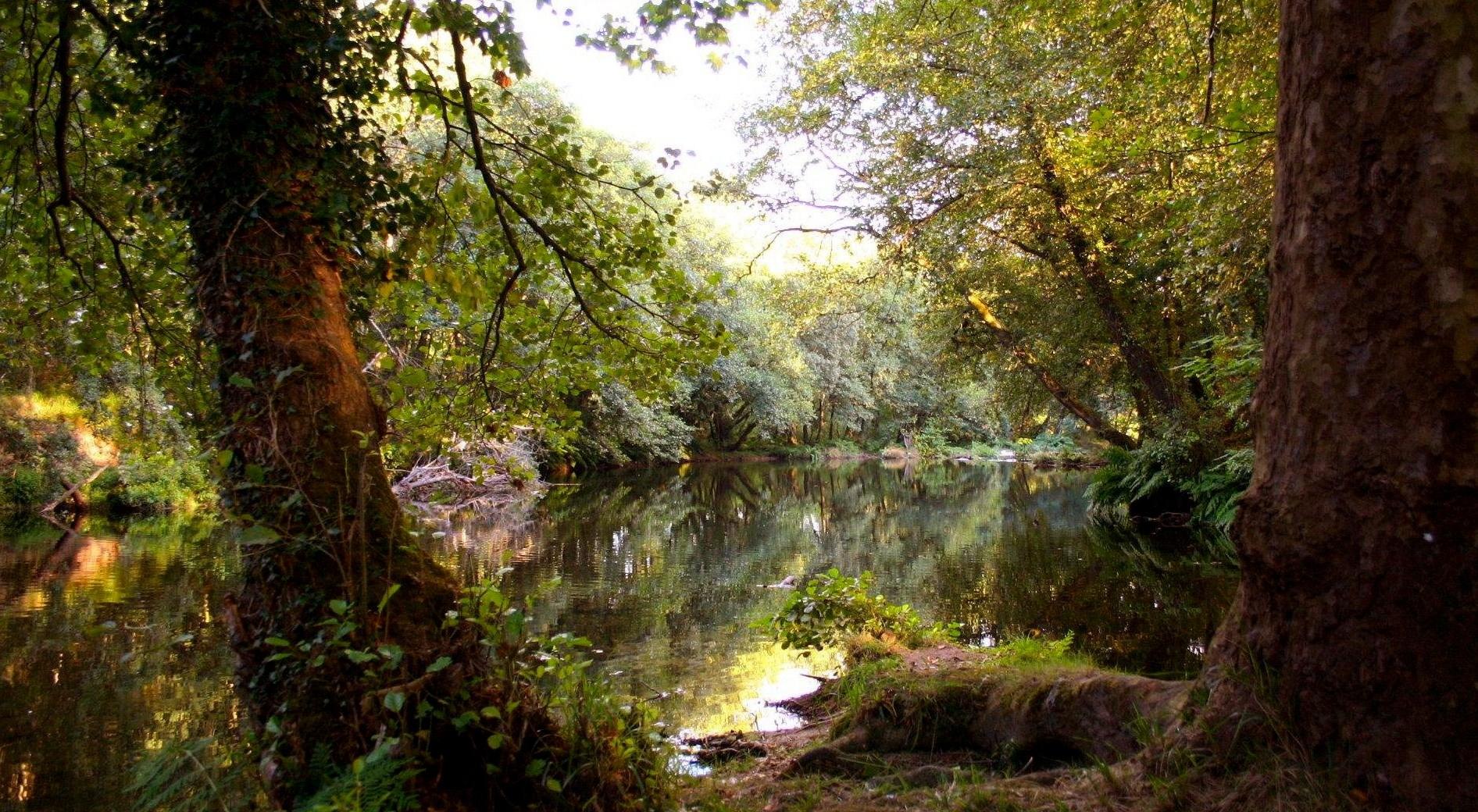 M gica naturaleza galiciaunica for Lo espejo 0450 el bosque