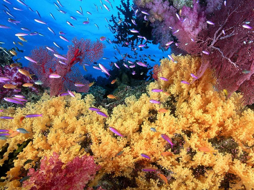 Pero bajo el agua que rodea a las Cíes hay otros tesoros...