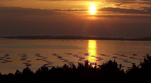El Sol muere cada tarde sobre las bateas.