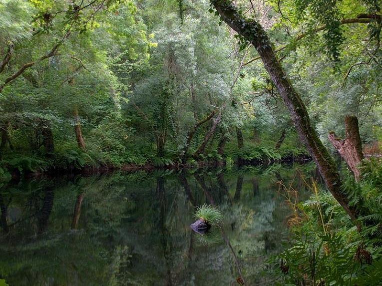 Río Tambre. Coto de pesca de Ames.