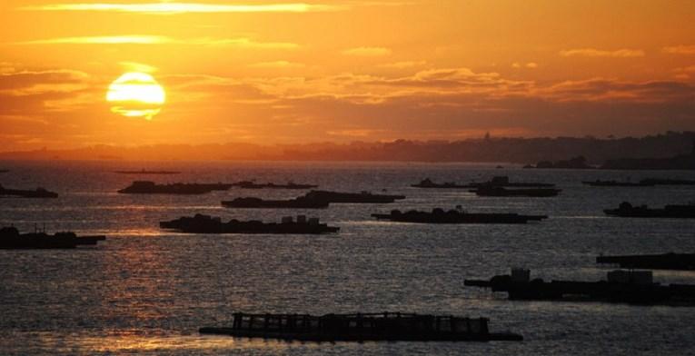 Illa de Arousa. Atardecer sobre las bateas.