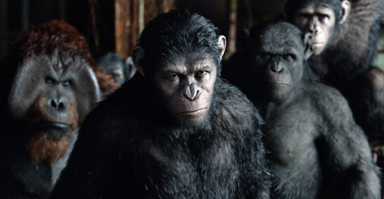 sociedad-de-simios