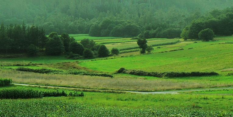 galicia-verde