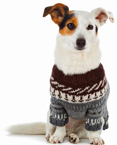 perro-con-abrigo