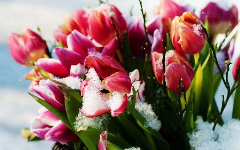 Flor entre la nieve